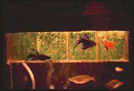 g02faganfish.jpg